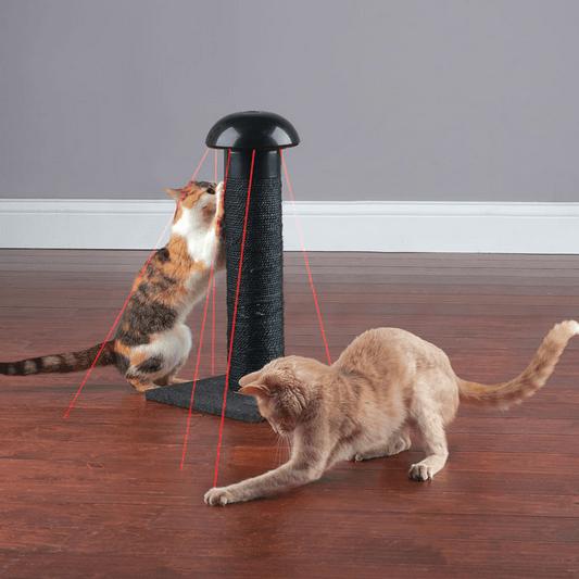 meilleur laser chat