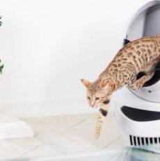 Les litières pour chat par Titiranol