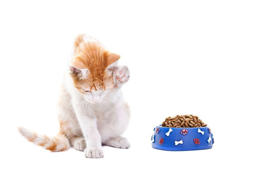 chat ne mange pas
