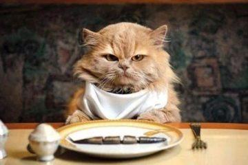 meilleur croquettes pour chat