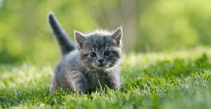 chaton balade