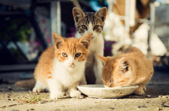 chaton mange croquette