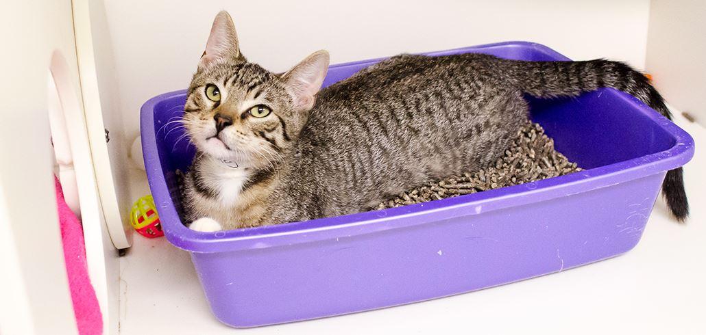 comparatif meilleur bac à litière pour chat