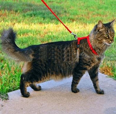 comparatif des harnais pour chats