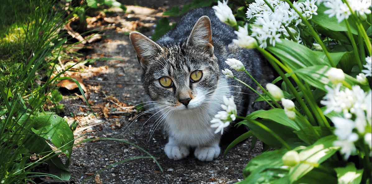 Répulsif ultrason pour chat