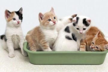 bac à litière chat odeur