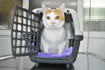 cage de transport pour chat