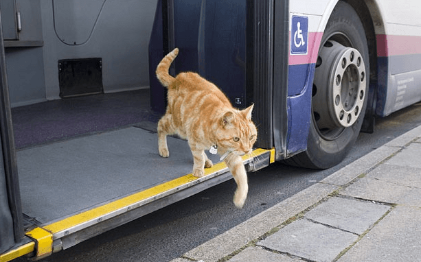 chat-bus