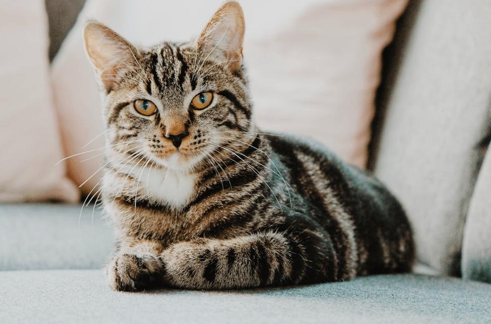 chat-sous-poids