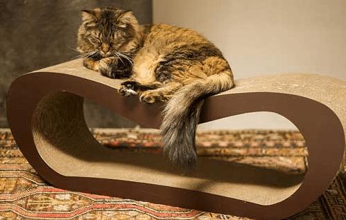 griffoir-chat