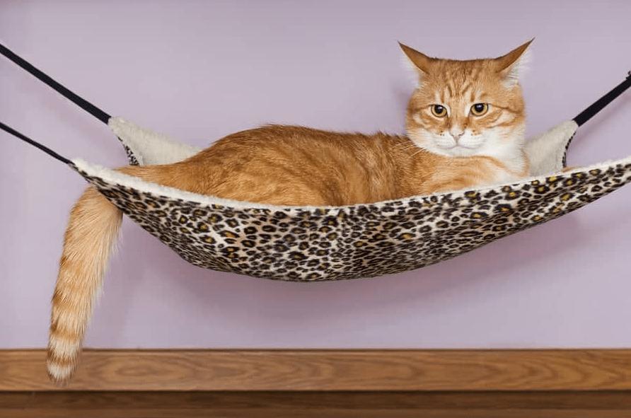 hamac pour chat suspendu radiateur
