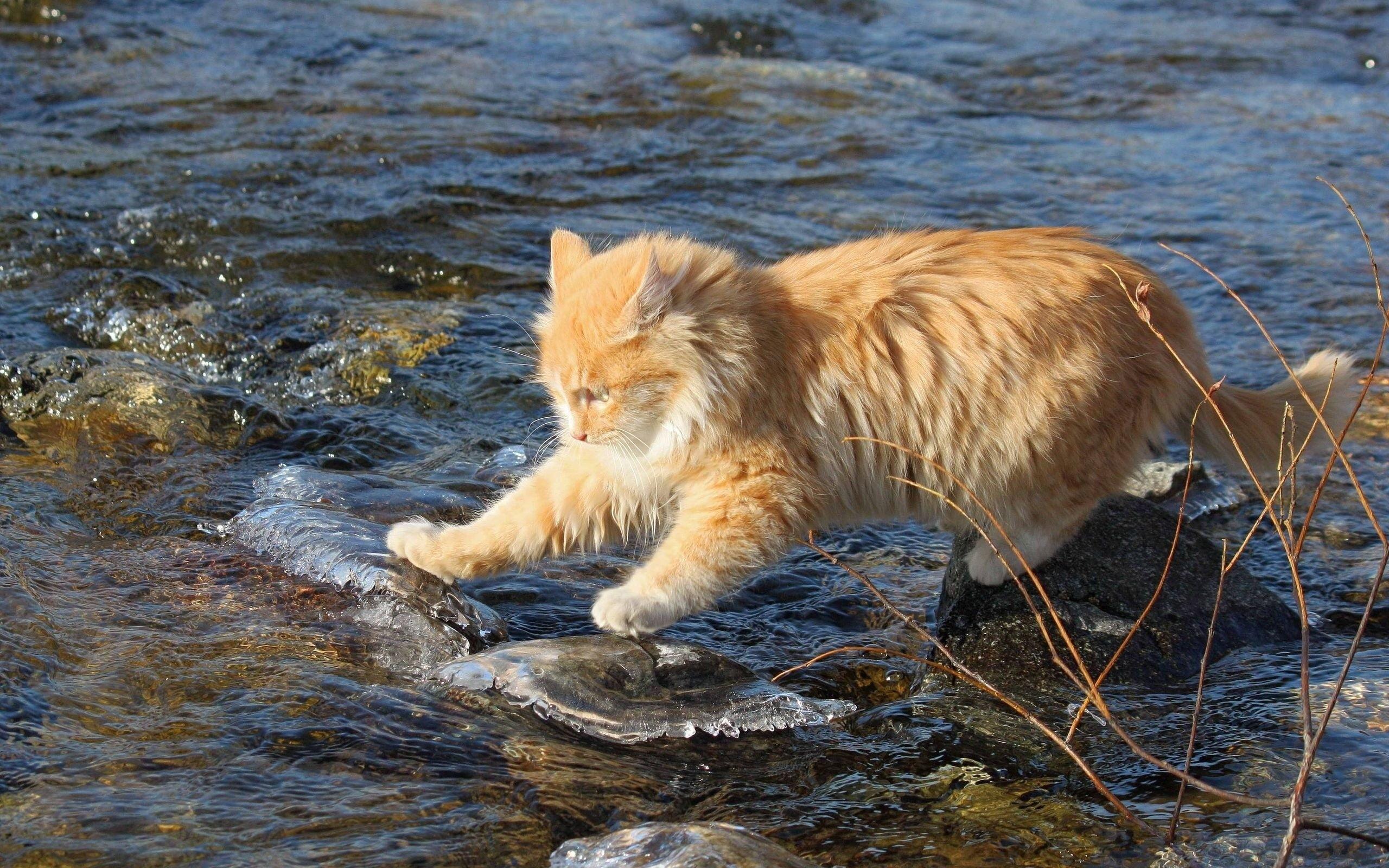 chat eau peur