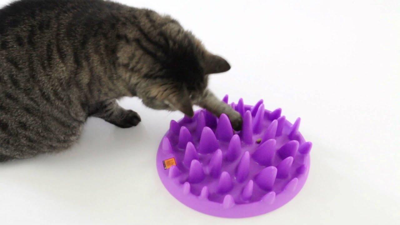 chat jouant avec une gamelle anti glouton