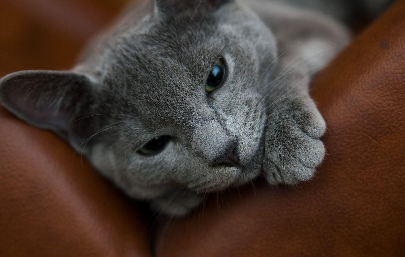 chat-maladie-urinaire