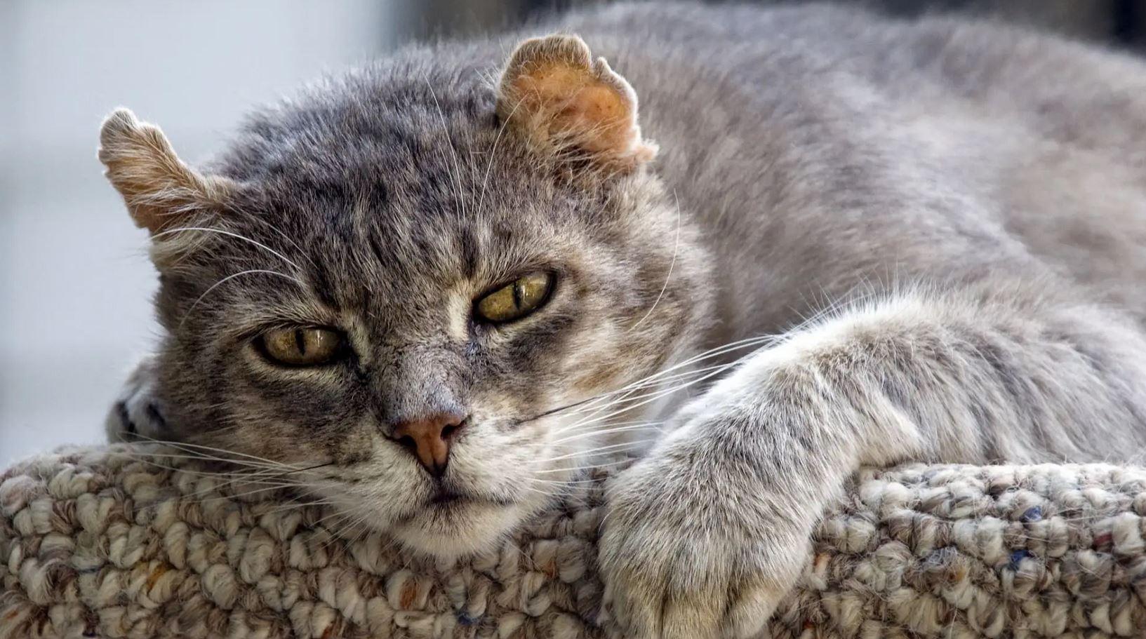 prendre soin d'un vieux chat