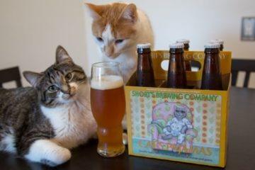 les chats peuvent ils boire de la bière