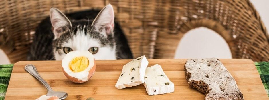 nourriture humain compatible chats