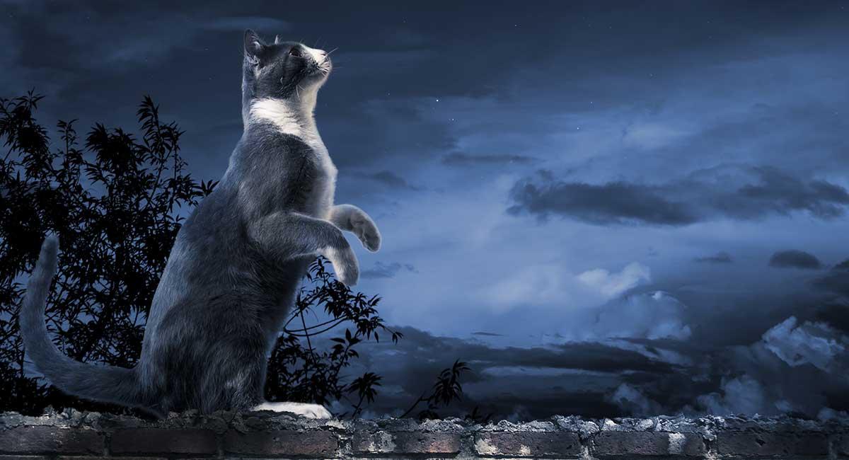 chat s'ennuie la nuit