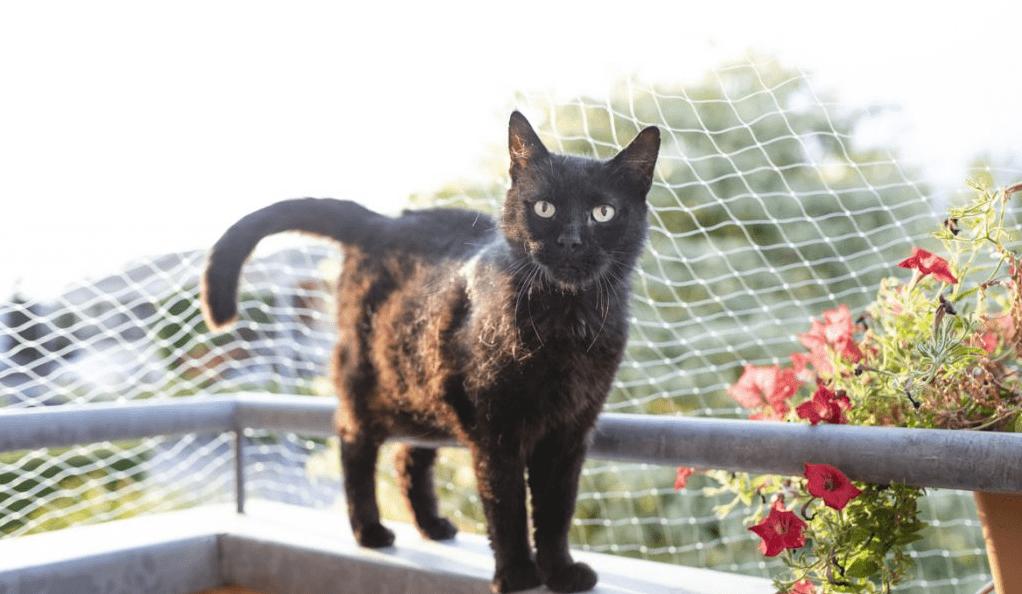 guide d'achat filet de protection pour chats