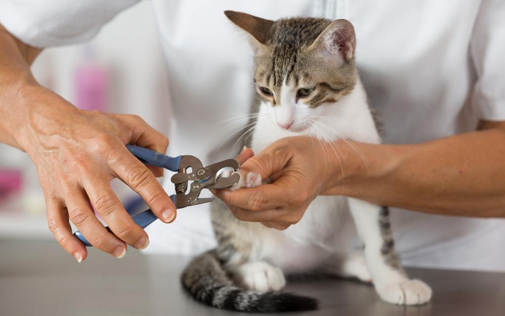 couper les griffes de son chat facilement