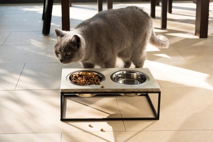 mon chat ne veut pas manger