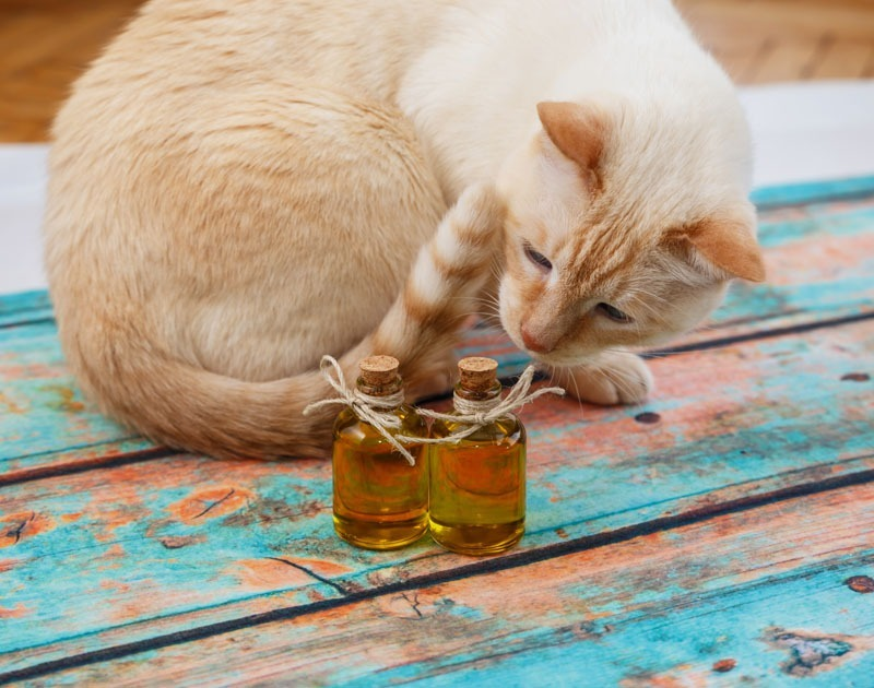 CBD pour les chats